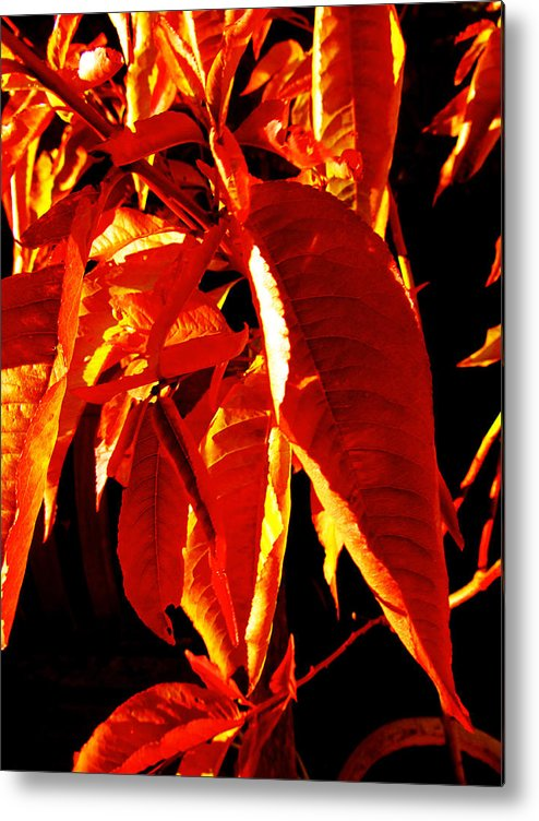 Leaves Metal Print featuring the digital art Autumn Leaves by Louise Grant