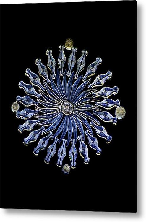 Alga Metal Print featuring the photograph Diatoms, Light Micrograph by Frank Fox