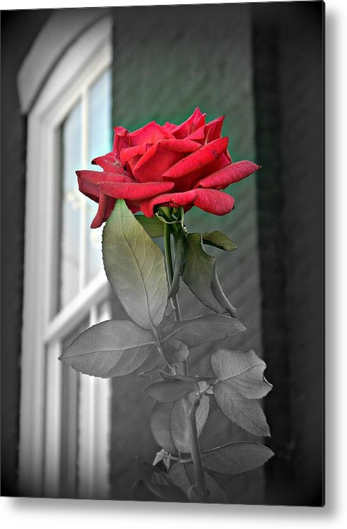 Rose Metal Print featuring the photograph Love by Stacy Dunlap