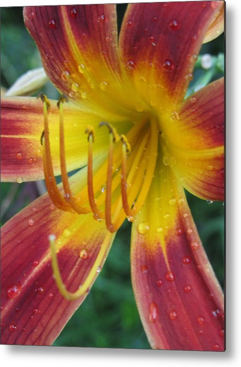 Flower With Raindrops Metal Print featuring the photograph Afternoon Storm by Todd Sherlock