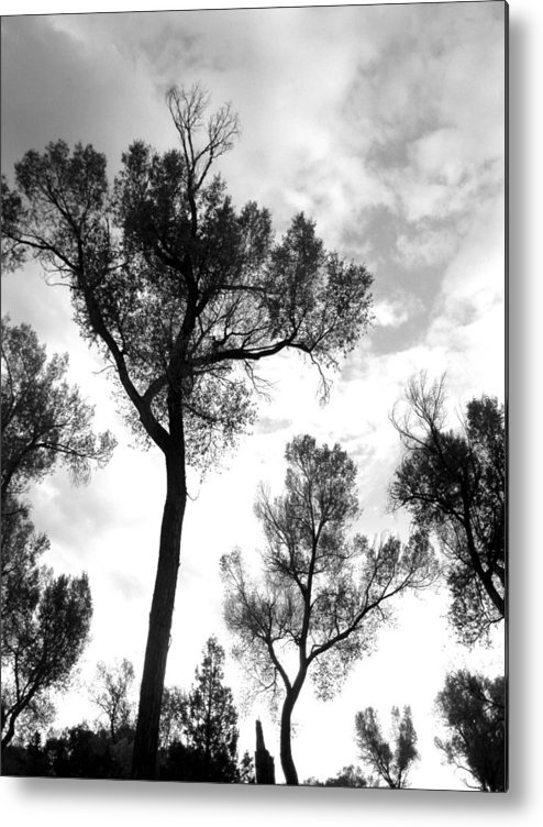 Cottonwood Metal Print featuring the photograph Cottonwood Silhouette Ser1 by Amara Roberts