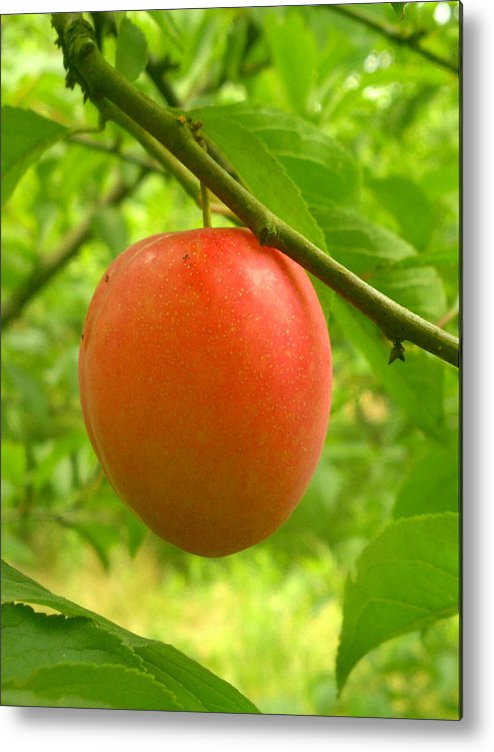 Agriculture Metal Print featuring the digital art Fruit Plums Red by Jeelan Clark