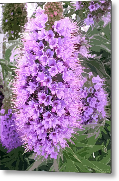 Fuzzy purple flower spike metal print by elaine plesser flower metal print featuring the painting fuzzy purple flower spike by elaine plesser mightylinksfo