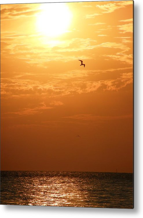 Sunset Metal Print featuring the photograph Golden Flight by Kimberly Mohlenhoff