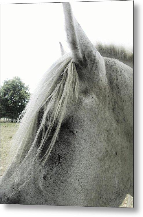 Horse Metal Print featuring the photograph Hair Cut by Todd Sherlock