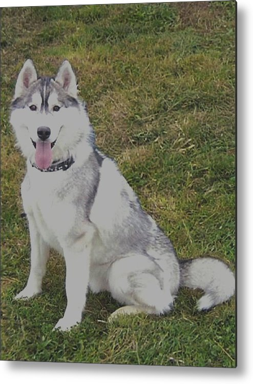 Dog Metal Print featuring the photograph Juneau The Great Communicator by Carol Van Sickle