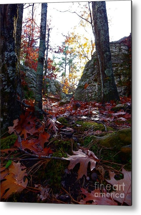 Fall Metal Print featuring the photograph Leaves In The Forest by Charleen Treasures