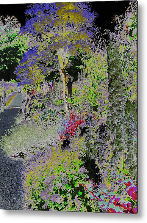 Flowers Metal Print featuring the photograph Magic Garden by Fred Whalley