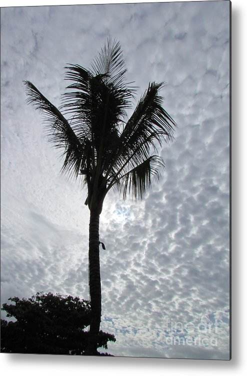 Palm Shadow With Beautiful Clouds Metal Print featuring the photograph Palm Shadow by Rajesh Nagalingum Vythilingum