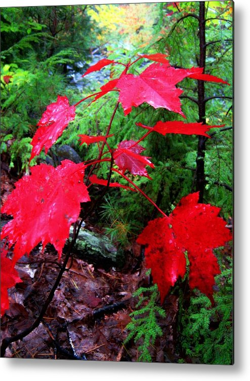 Red Metal Print featuring the photograph Red Leaves by Wayne Toutaint