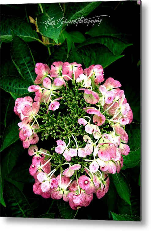 Nature Metal Print featuring the photograph Ring Of Pink by Ruth Bodycott