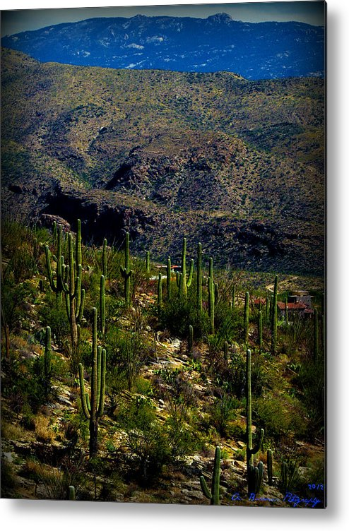 Rincon Mountains Metal Print featuring the photograph Saguaro Views To Rincon Peaks by Aaron Burrows