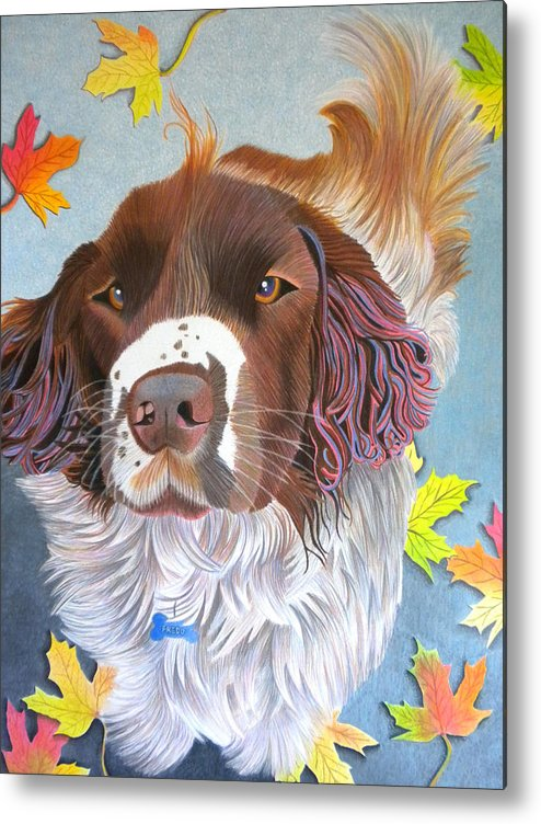 Dog Metal Print featuring the drawing Springer Spaniel Mix - Fredo by Annie Nelson