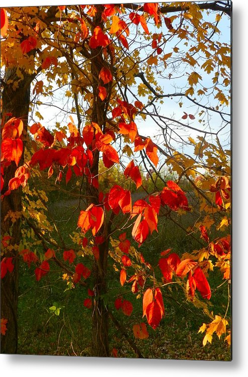 Autumn Metal Print featuring the photograph The Reds Of Autumn by Julie Dant