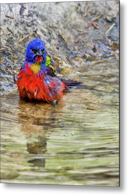 Sandra Barnes Metal Print featuring the photograph Totally Disgusting by Sandra M Barnes