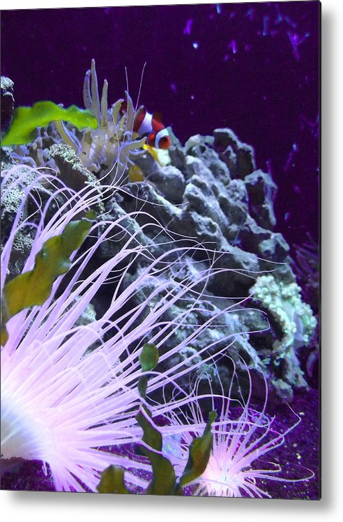 Underwater Metal Print featuring the photograph Undersea World by Robin Hewitt