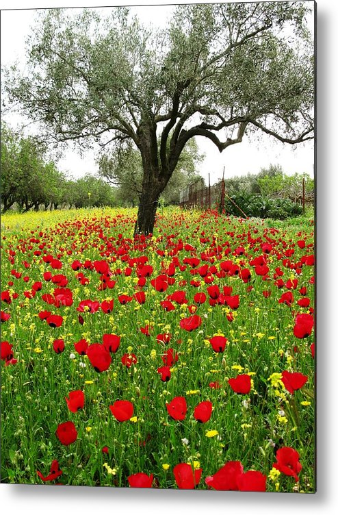 Old Olive Tree Metal Print featuring the photograph Olive Amongst Poppies by Andonis Katanos