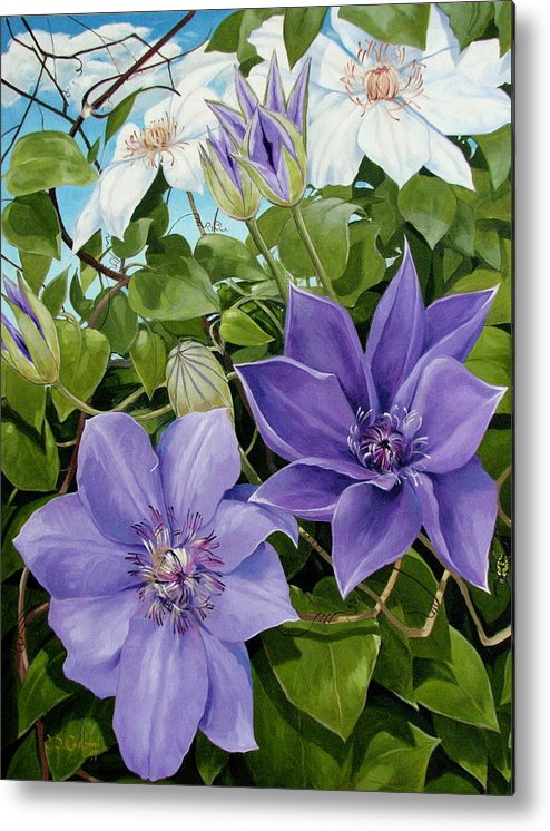 Clematis Metal Print featuring the painting Clematis 2 by Jerrold Carton
