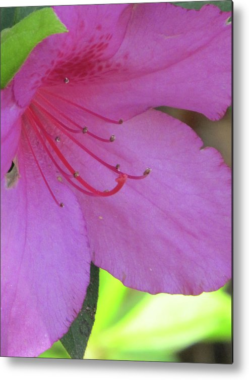 Flowers Metal Print featuring the photograph Azalea by Michele Caporaso