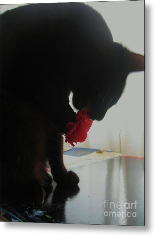 Photograph Cat Black Red Flower Camellia Metal Print featuring the photograph Cat Eating Camellia by Seon-Jeong Kim