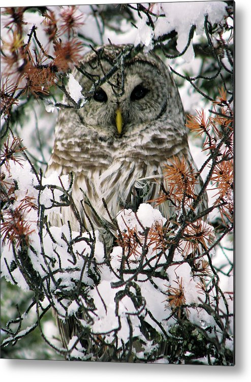 Owl Metal Print featuring the photograph What A Hoot by Lisa Jacob