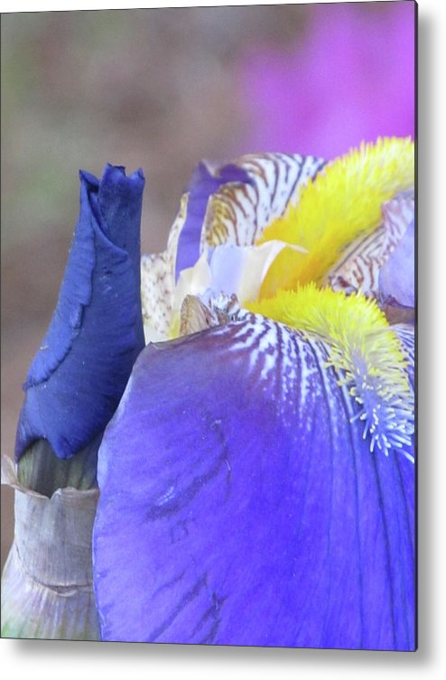Flowers Metal Print featuring the digital art Iris by Michele Caporaso
