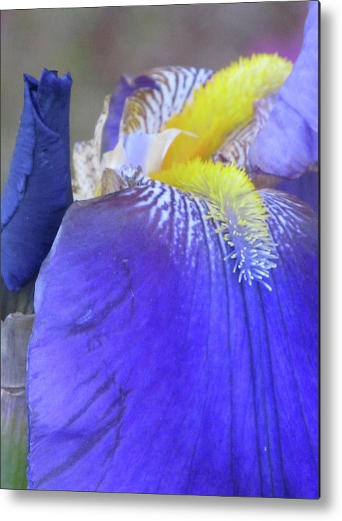 Flowers Metal Print featuring the photograph Iris by Michele Caporaso