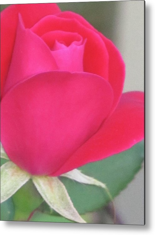 Flowers Metal Print featuring the digital art Rose by Michele Caporaso