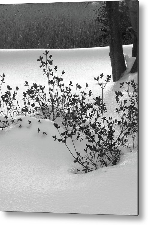 Bw Photo Metal Print featuring the photograph A Creme Brulee Winter by Margie Avellino