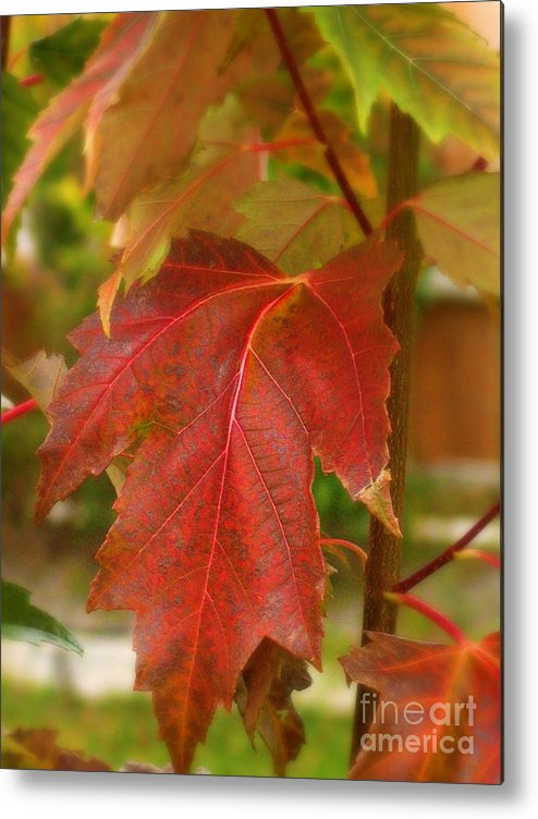 Fall Metal Print featuring the photograph A Taste Of Fall by Mg Blackstock