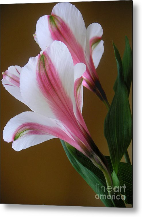 Nature Metal Print featuring the photograph Alstroemerias - Together by Lucyna A M Green