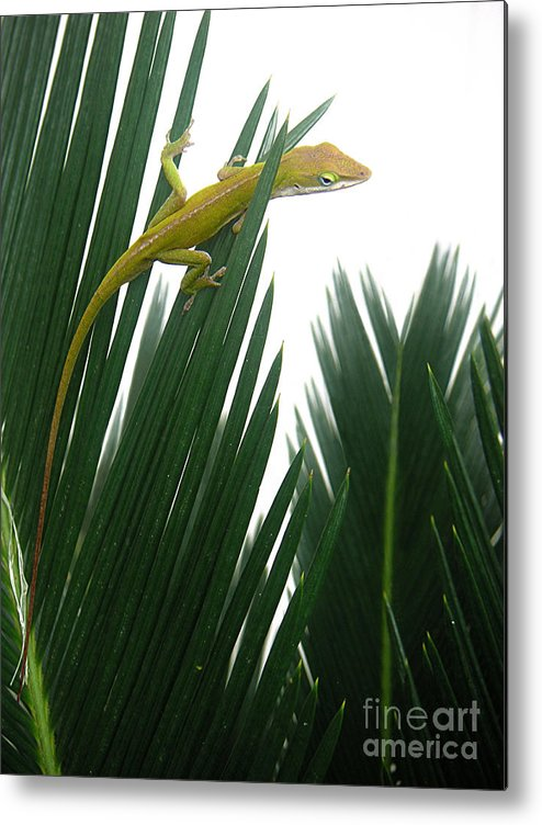 Nature Metal Print featuring the photograph Anole With Palm - Flexible by Lucyna A M Green