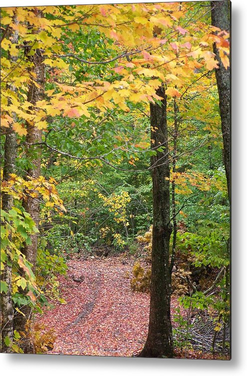 Autumn Metal Print featuring the photograph Another Vermont Autumn by ShadowWalker RavenEyes Dibler