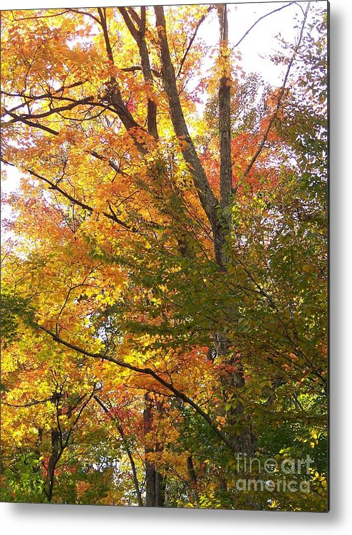 Autumn Metal Print featuring the photograph Autumn's Gold - Photograph by Jackie Mueller-Jones