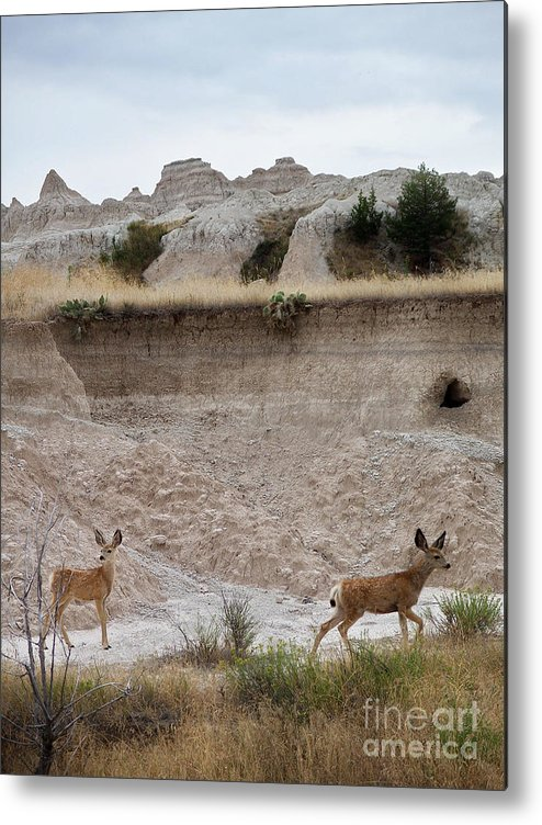 Badlands Metal Print featuring the photograph Badlands Deer Sd by Tommy Anderson