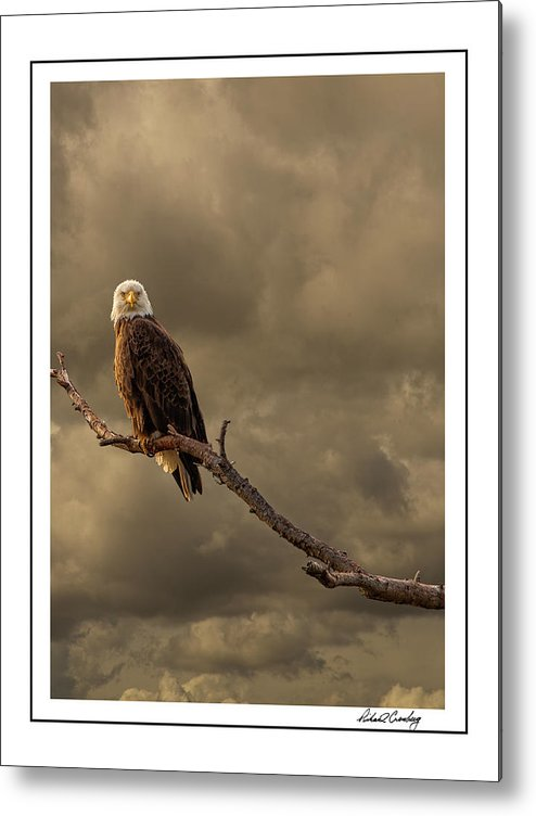 Eagle Metal Print featuring the photograph Bald Eagle Storm by Richard Cronberg