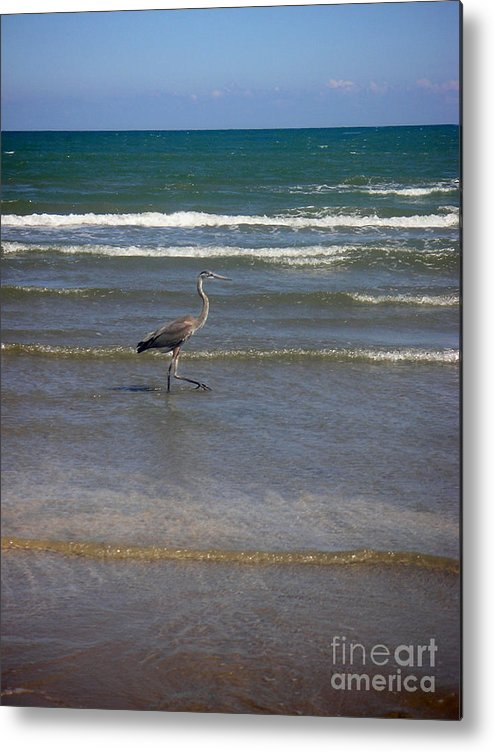 Nature Metal Print featuring the photograph Being One With The Gulf - In Step by Lucyna A M Green