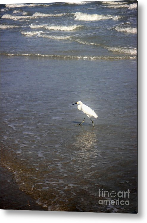 Nature Metal Print featuring the photograph Being One With The Gulf - Wary by Lucyna A M Green