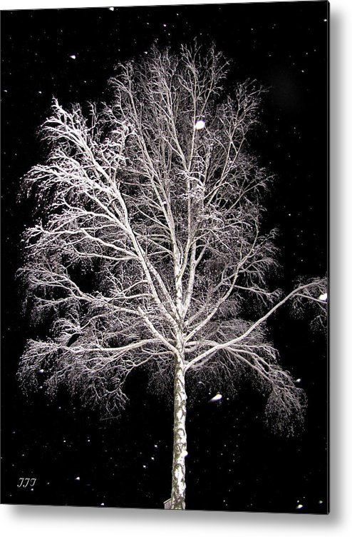 Scenes/outdoor Metal Print featuring the photograph Big Birch by Jim Turri