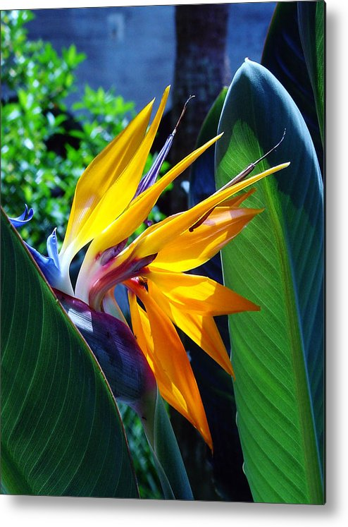 Flowers Metal Print featuring the photograph Bird Of Paradise by Susanne Van Hulst