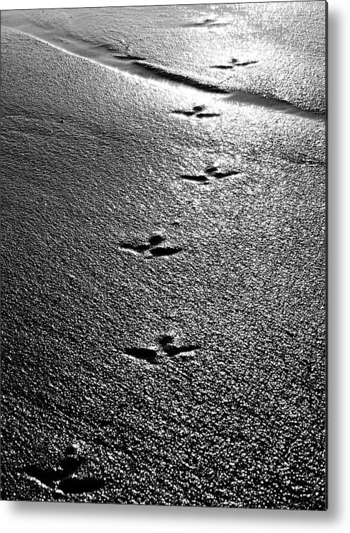 Sand Metal Print featuring the photograph Bird Prints In The Sand Black And White by Jill Reger