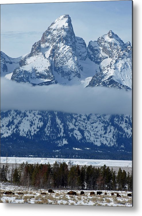 Nature Metal Print featuring the photograph Bison And The Grand by DeeLon Merritt