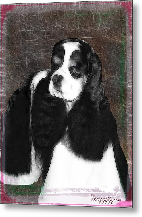 Dog Metal Print featuring the photograph Black And White Cookie by Ericamaxine Price