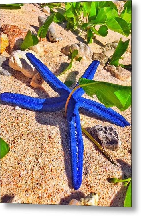 Blue Metal Print featuring the photograph Blue Starfish by Jade Phoenix