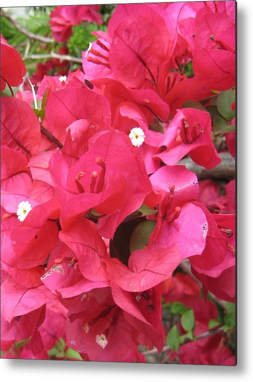 Flower Metal Print featuring the photograph Bougainvillea by Angela Siener