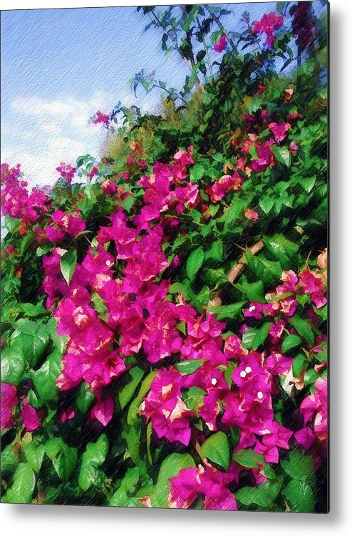 Bougainvillea Metal Print featuring the photograph Bougainvillea by Sandy MacGowan