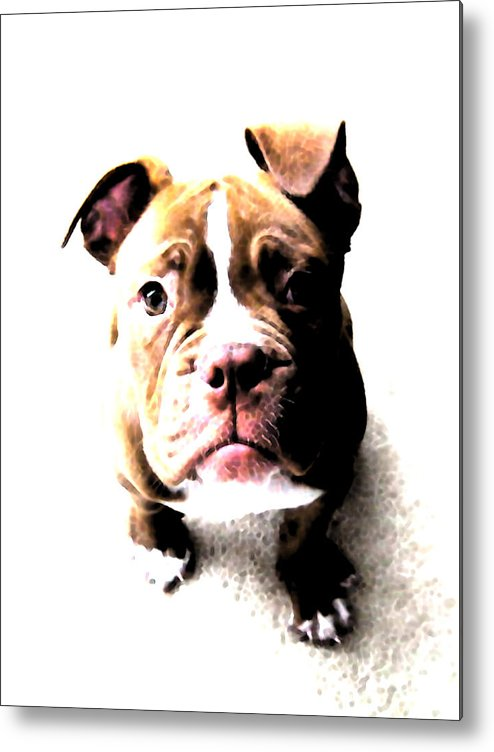 Bulldog Metal Print featuring the digital art Bulldog Puppy by Michael Tompsett