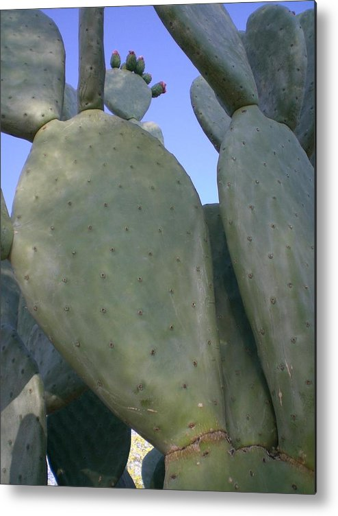 Cactus Metal Print featuring the photograph Cacti Everywhere by Aleksandra Buha
