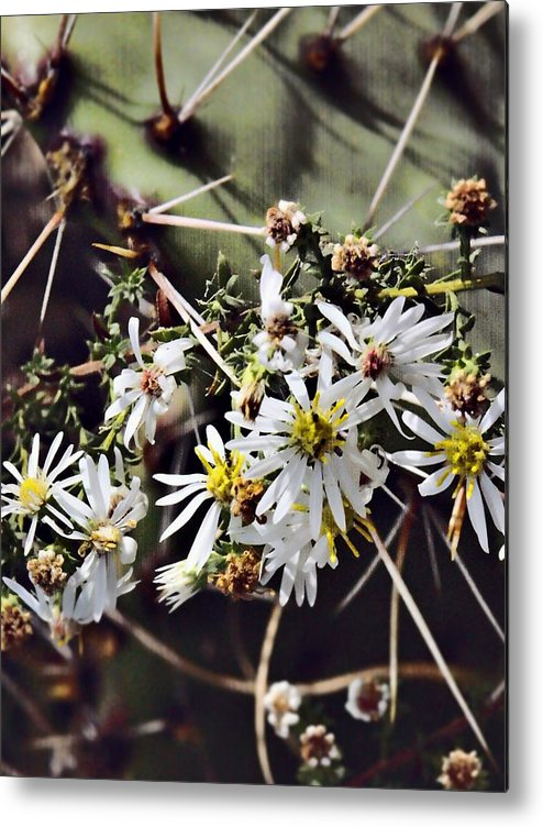 Cactus Metal Print featuring the photograph Cactus Flowers by Scott Wyatt