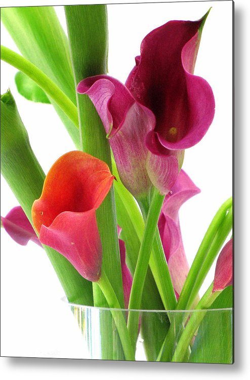 Calla Lily Metal Print featuring the photograph Callas In Pink by Lisa Jayne Konopka